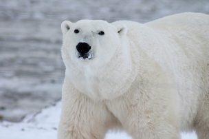 北極の氷が溶けても海水面が上がらない理由