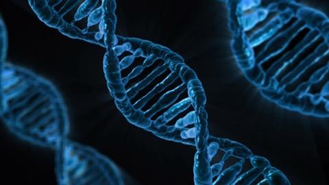 ゲイ 遺伝